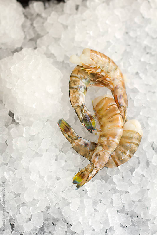 Prawns on ice  by Noemi Hauser for Stocksy United