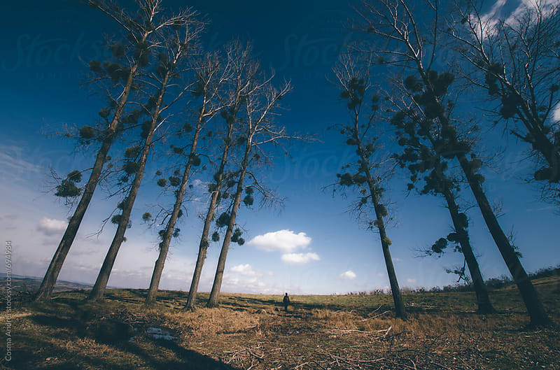 Surreal landscape with man between trees by Cosma Andrei for Stocksy United