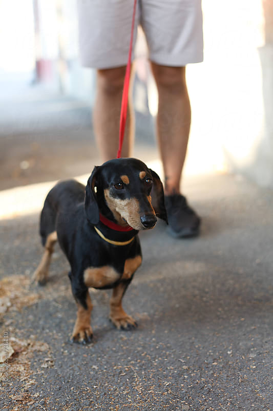 Cute black dog on the leash in the street  by VeaVea for Stocksy United