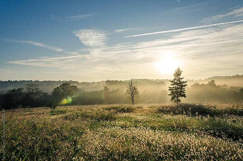 Carolina Sunrise by Leslie Taylor for Stocksy United