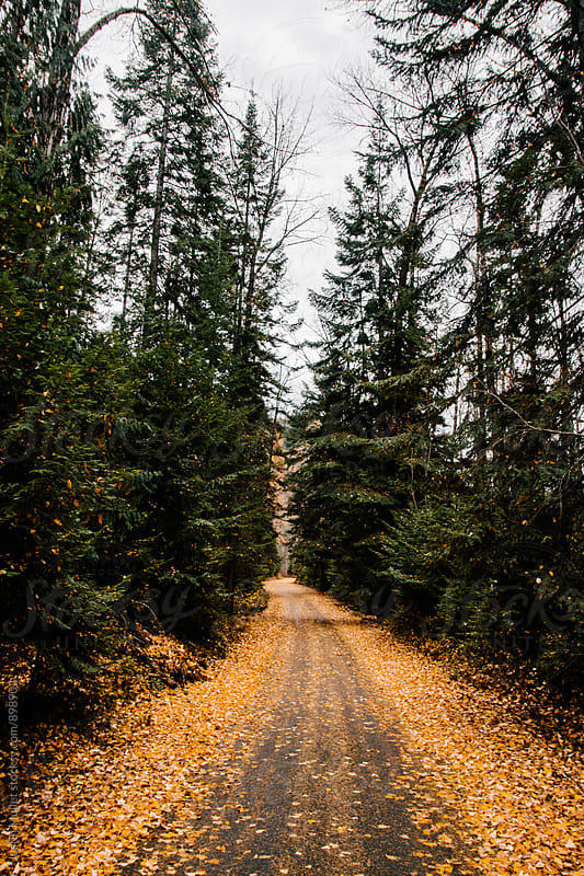 Road covered in yellow and orange leaves. by Justin Mullet for Stocksy United