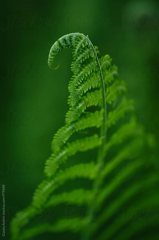 Green fern by Cosma Andrei for Stocksy United