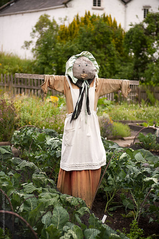 female scarecrow in a vegetable garden  by Lee Avison for Stocksy United