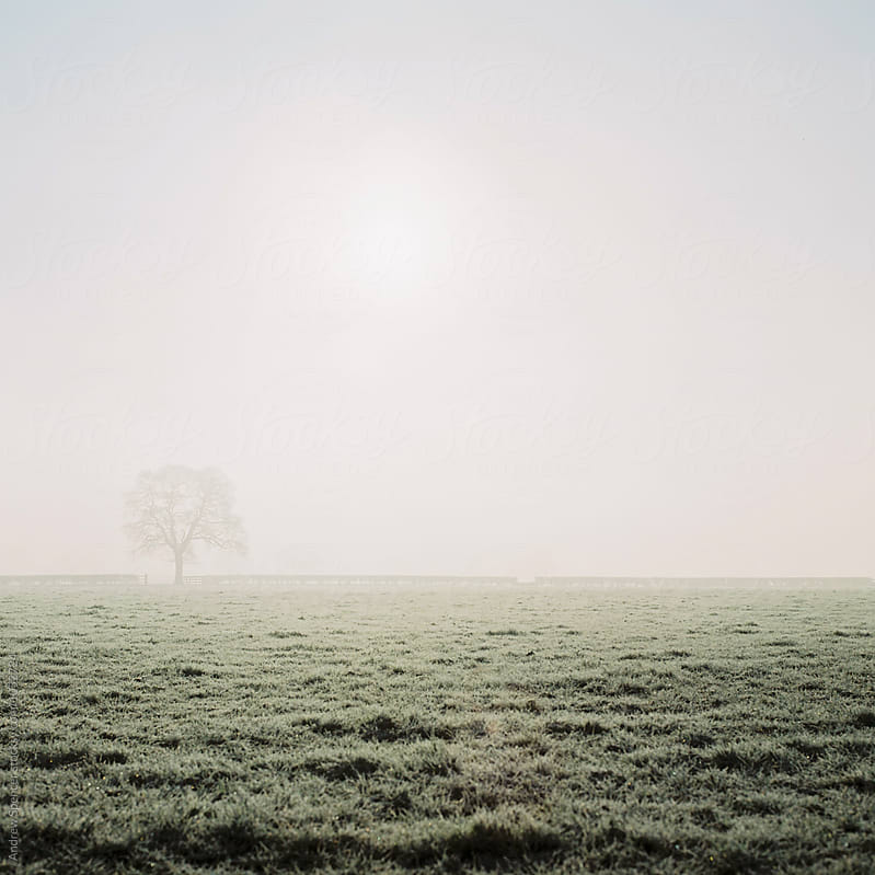 Tree lonely in the fog by Andrew Spencer for Stocksy United