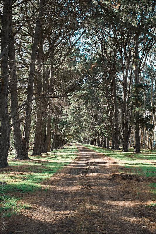 Beautiful Natural Country Driveway of Homestead by Rowena Naylor for Stocksy United
