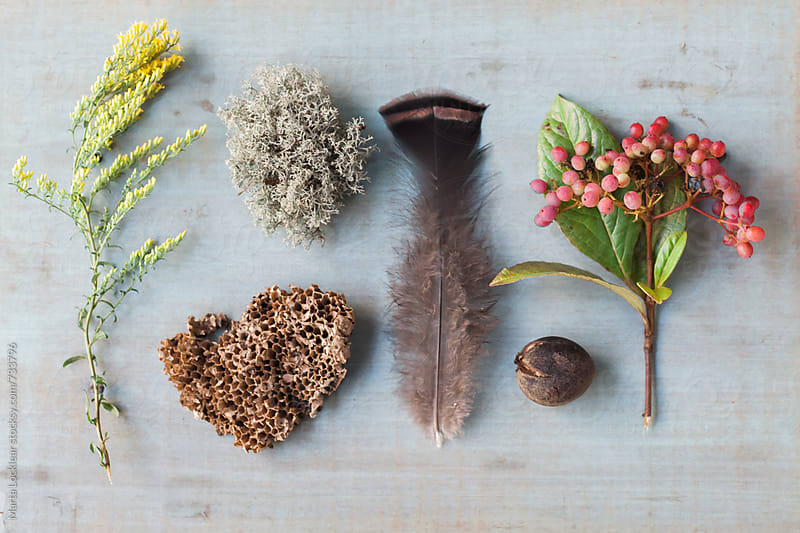 Objects found on a hike by Marta Locklear for Stocksy United
