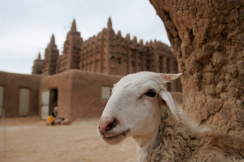 Portrait of a goat at Great mosque of Djenné by Ferenc Boros for Stocksy United