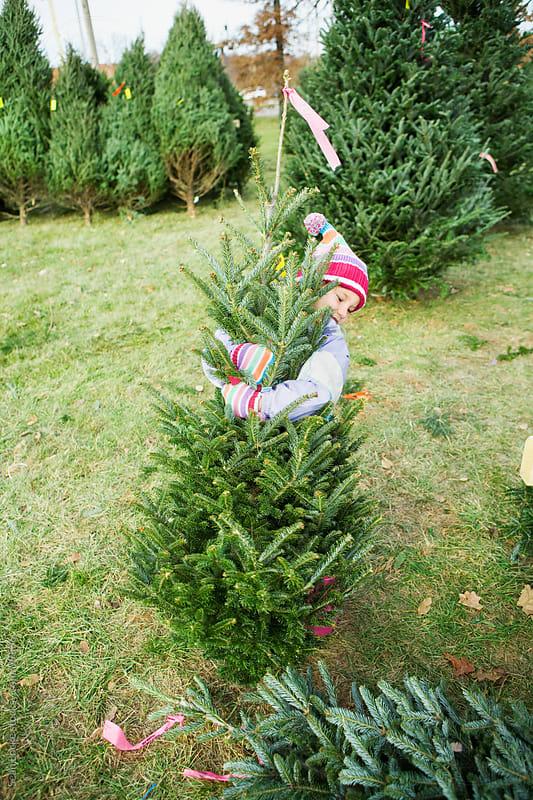 Tree Lot: Little Girl Picks Out Tree by Sean Locke for Stocksy United