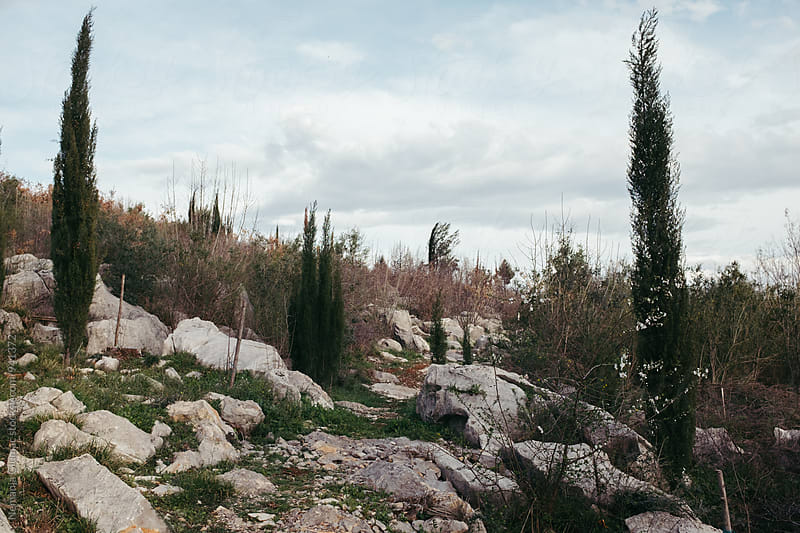 Montenegrin Rocky Landscape With Cypresses by Nemanja Glumac for Stocksy United