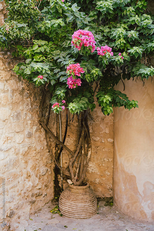 Beautiful plant with pink flowers by Alberto Bogo for Stocksy United