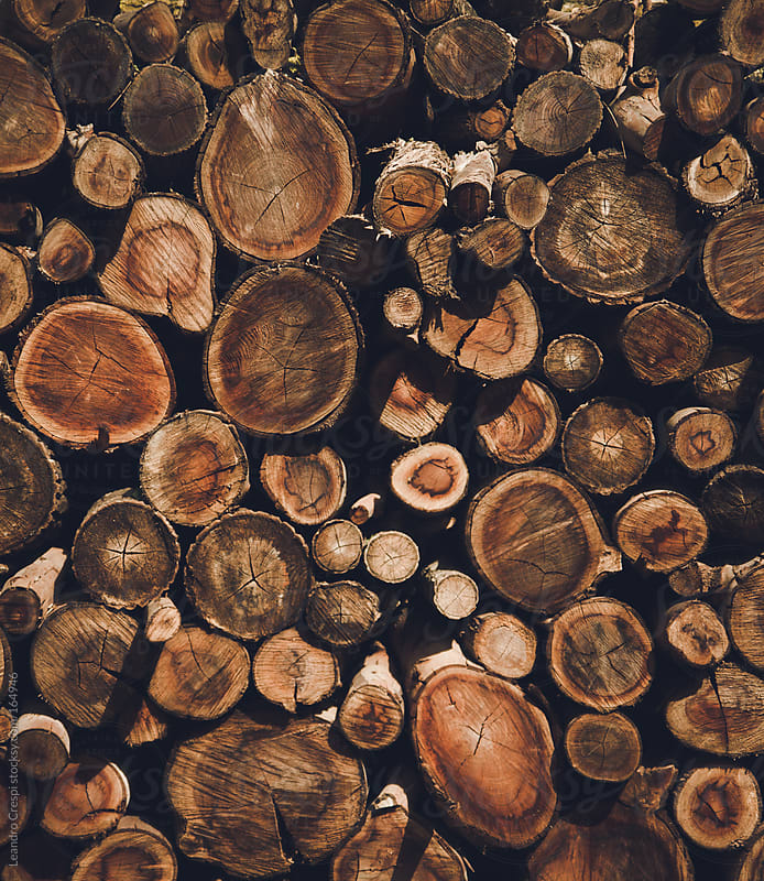 pile of logs by Leandro Crespi for Stocksy United