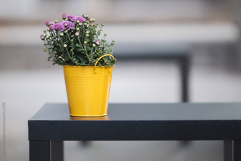 A Yellow Pot with Pink Flowers by Helen Sotiriadis for Stocksy United