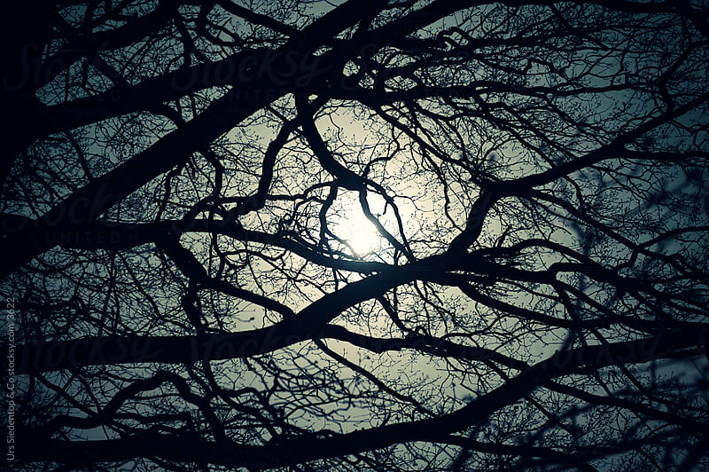 Moon shining through oak brenches by Urs Siedentop & Co for Stocksy United