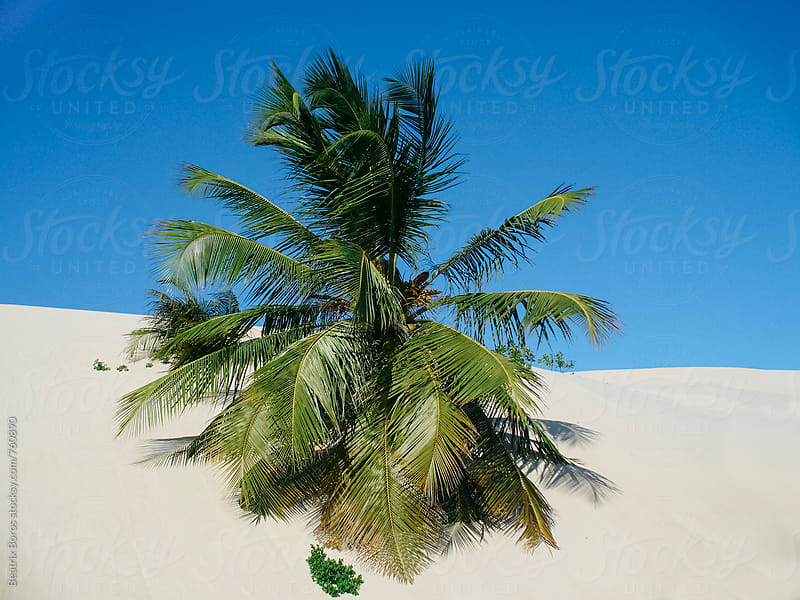 Palm tree trunk under the sand dunes by Beatrix Boros for Stocksy United