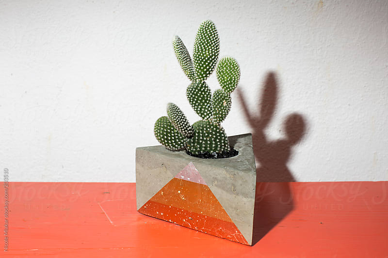 Succulents in planter by Nicole Mlakar for Stocksy United