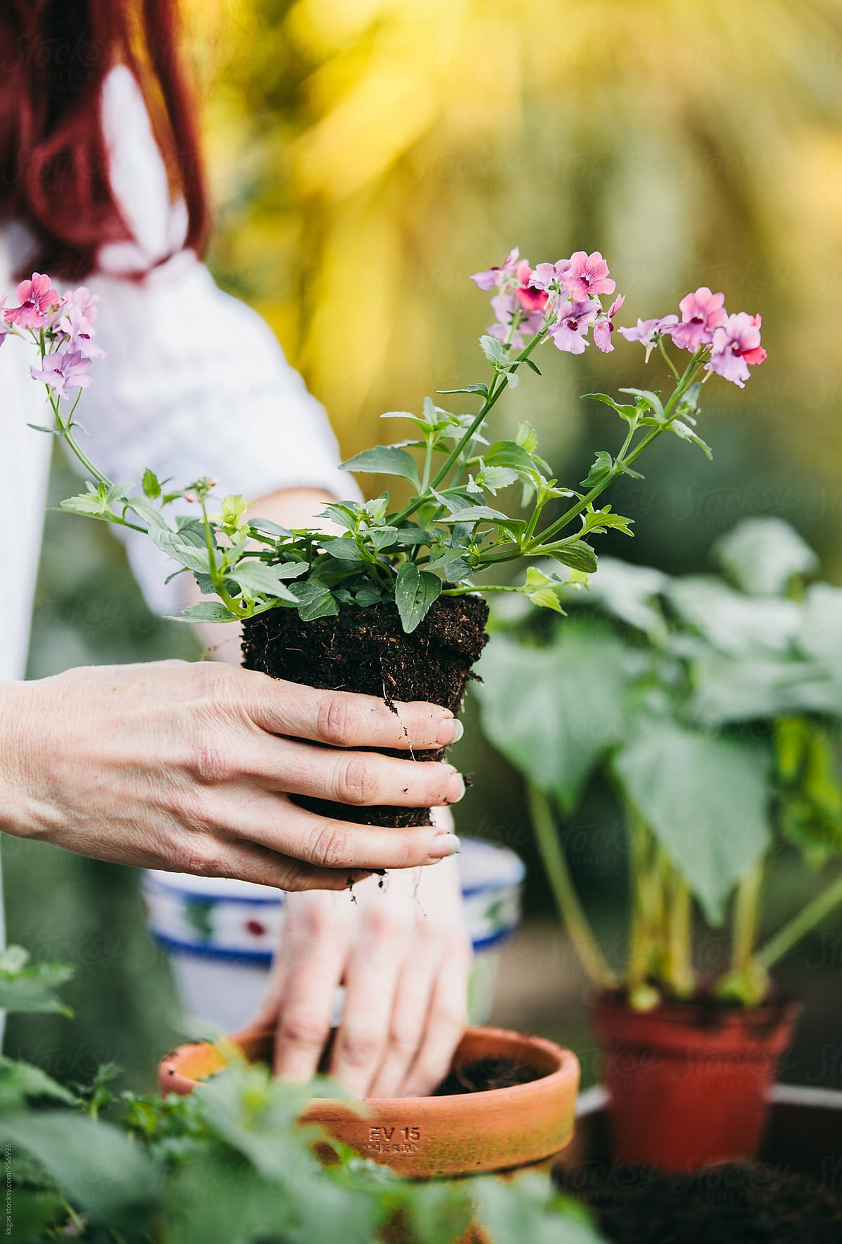Woman planting spring flowers into terracotta pots stocksy united woman planting spring flowers into terracotta pots by kkgas for stocksy united mightylinksfo