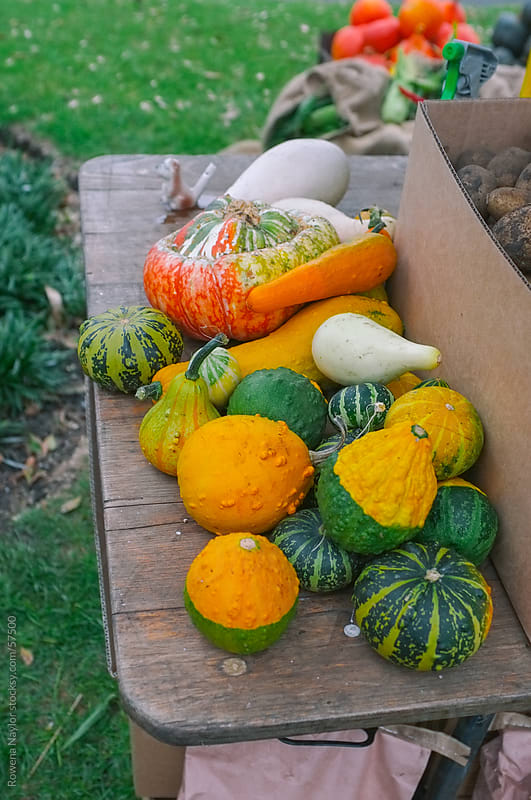 Organic Pumpkins for sale at a Market by Rowena Naylor for Stocksy United