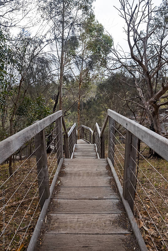 Timber steps leading to a bush lansdscape by Rowena Naylor for Stocksy United