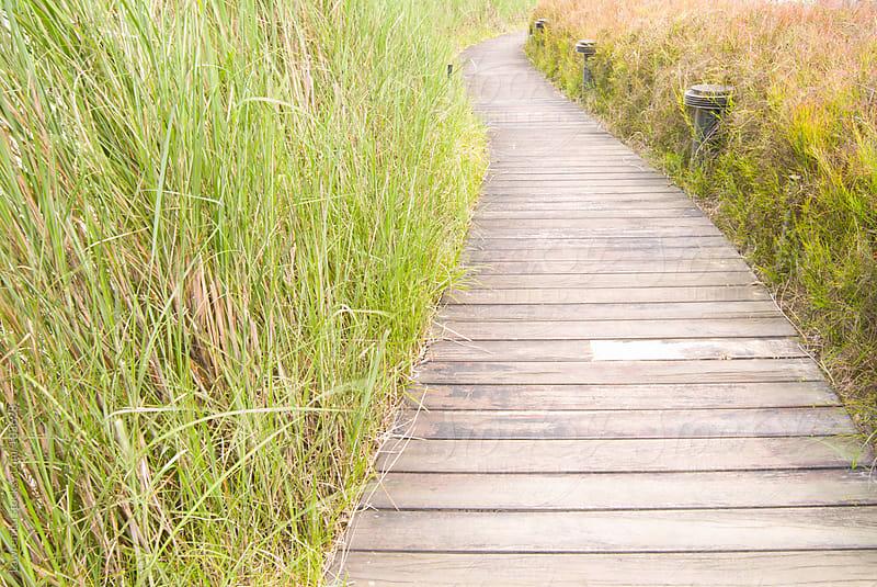 Wooden footpath to unlimited field by Lawren Lu for Stocksy United