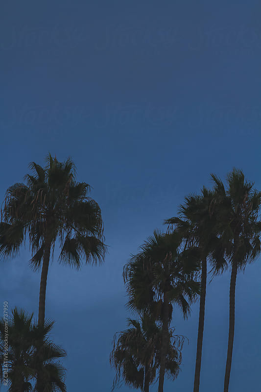 Palm trees against a blue sky. by RZ CREATIVE for Stocksy United