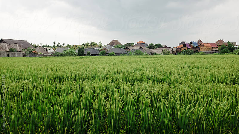 Peaceful Balinese Landscape by Nemanja Glumac for Stocksy United