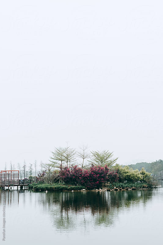 lake and trees by Xunbin Pan for Stocksy United