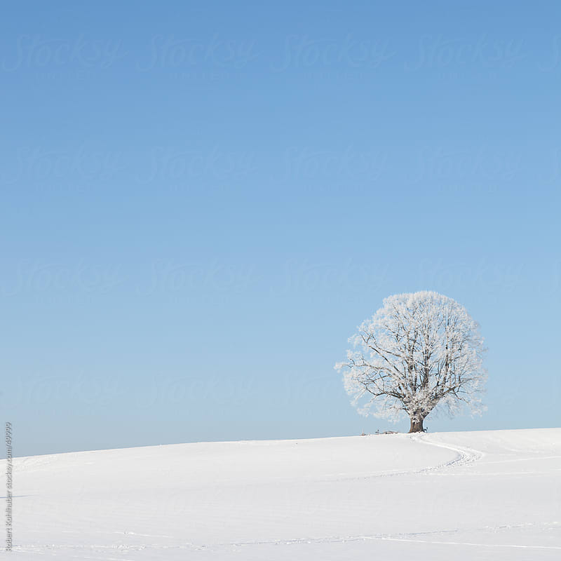Tree in winter landscape by Robert Kohlhuber for Stocksy United
