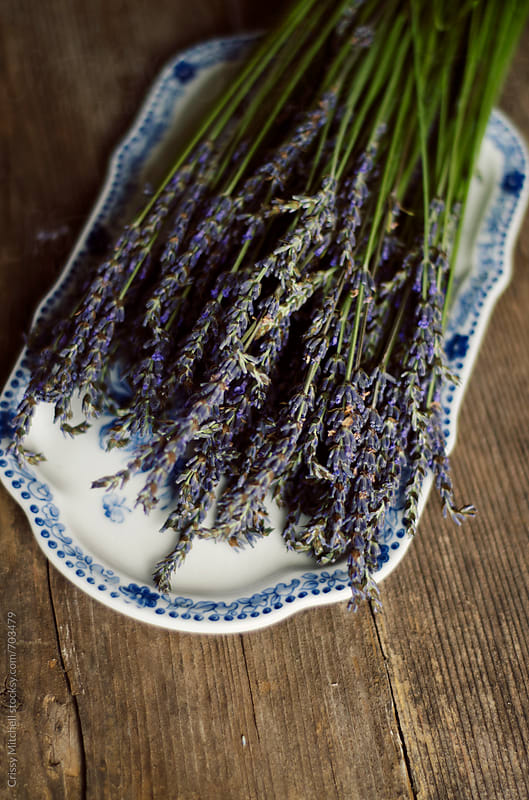 lavender by Crissy Mitchell for Stocksy United