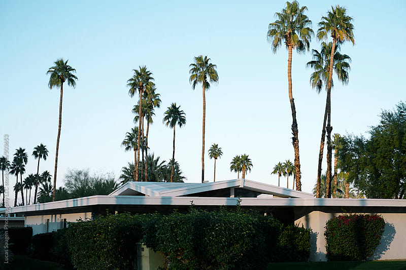 Palm trees and roofs tops at dusk in Palm Springs by Lucas Saugen for Stocksy United
