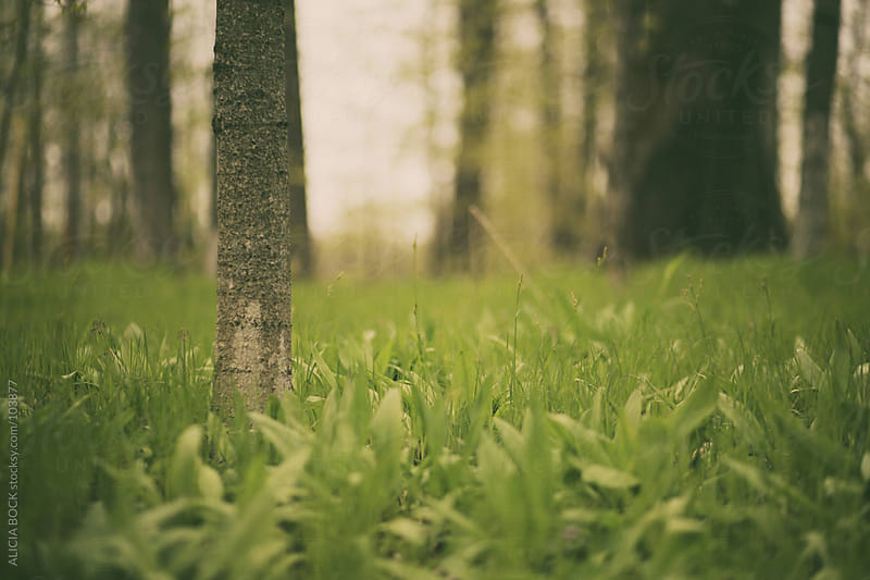 Forest of Wild Ramps by ALICIA BOCK for Stocksy United