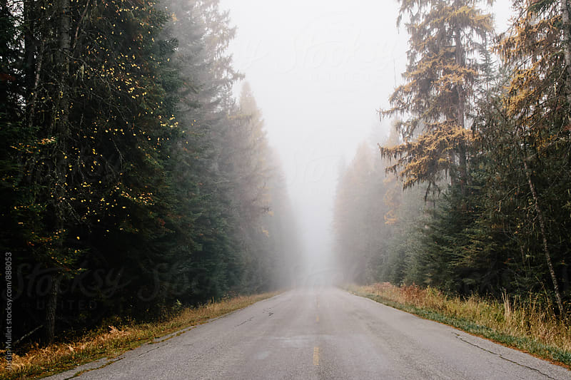 Rural country road in Washington by Justin Mullet for Stocksy United