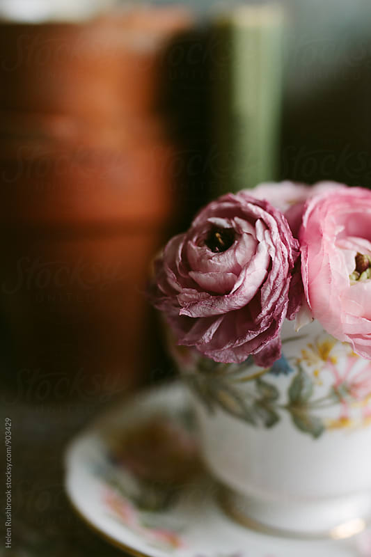 Pretty Ranunculus flowers in a vintage tea cup. by Helen Rushbrook for Stocksy United