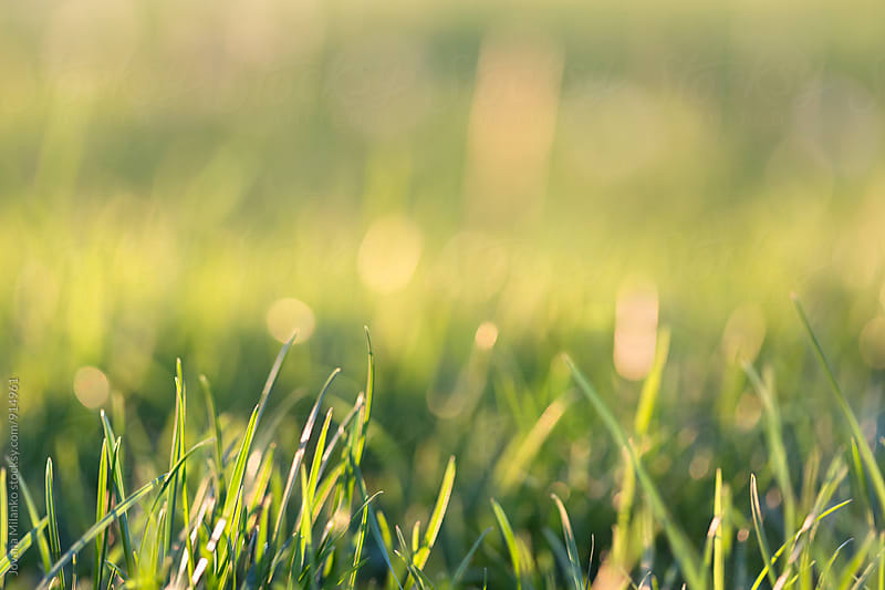 Green grass background by Jovana Milanko for Stocksy United