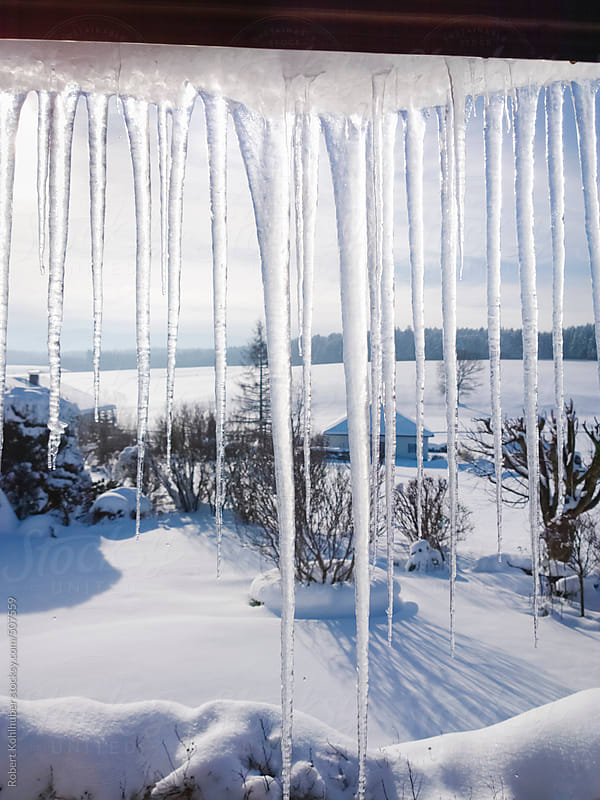 Large icicles in front of winter garden by Robert Kohlhuber for Stocksy United