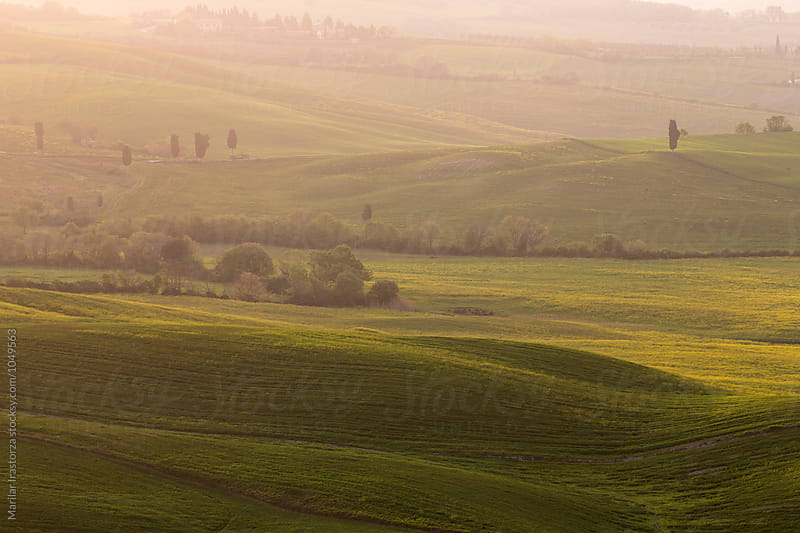 Tuscany fields in a misty morning by Marilar Irastorza for Stocksy United