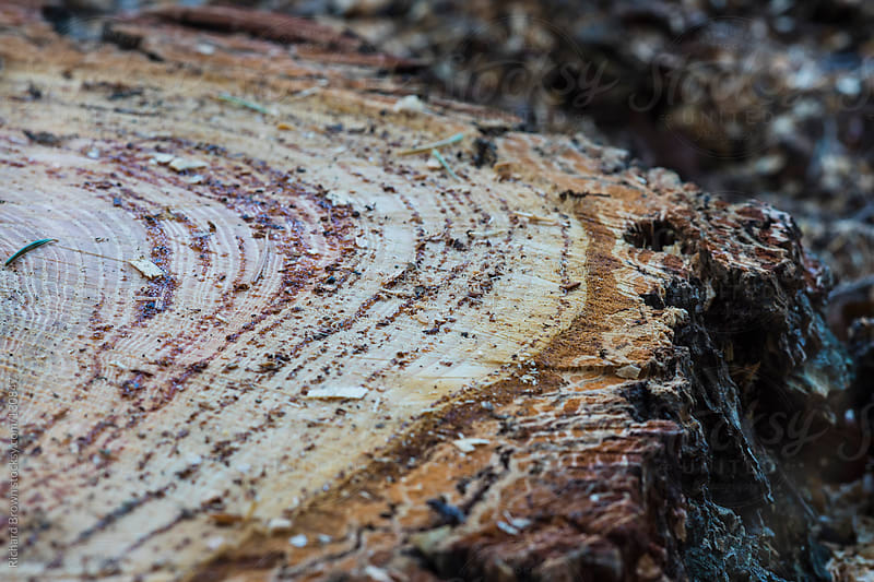 A closeup of a tree stump by Richard Brown for Stocksy United