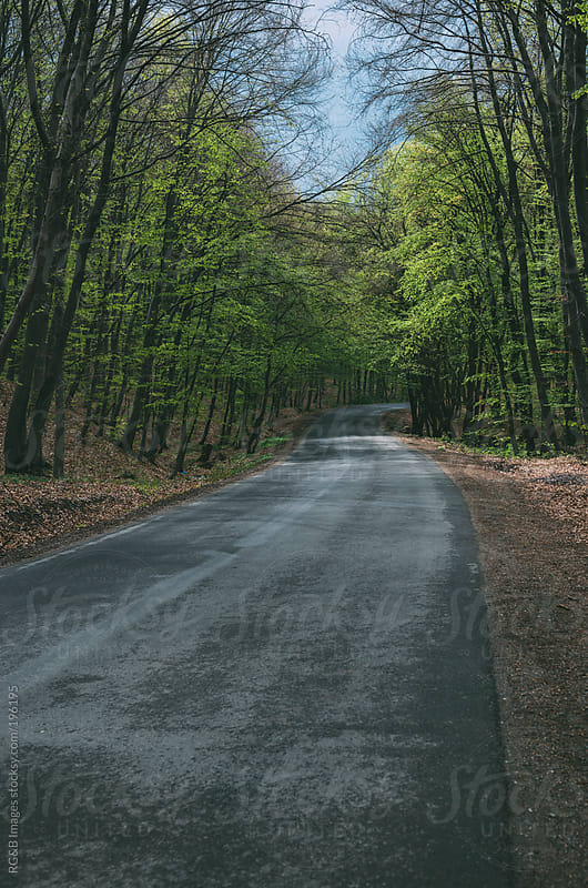 Forest road  by RG&B Images for Stocksy United