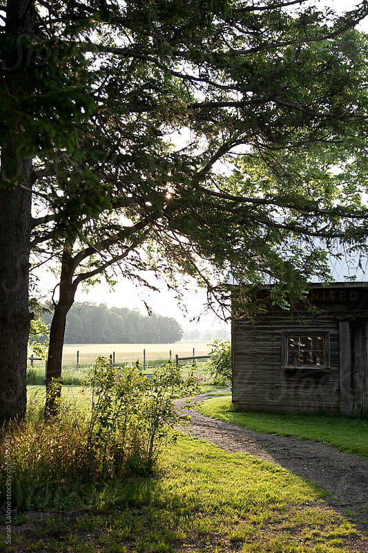 A pathway under a tree and around a barn. by Sarah Lalone for Stocksy United