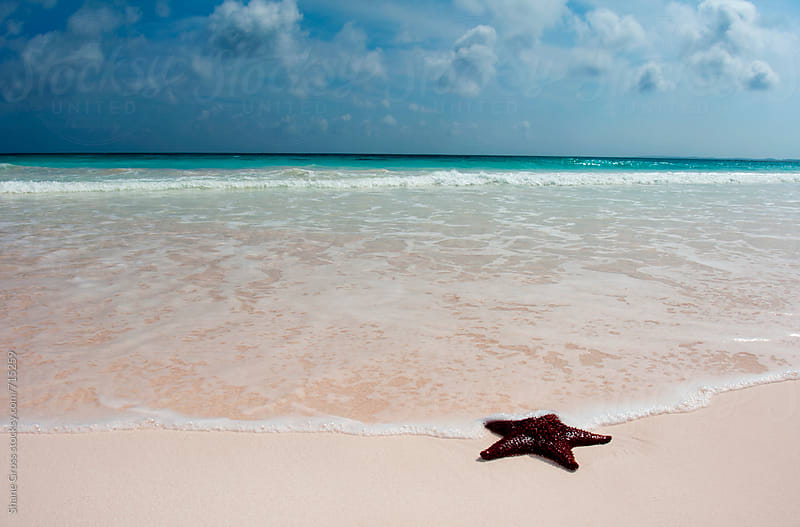 Sea Star Beach by Shane Gross for Stocksy United