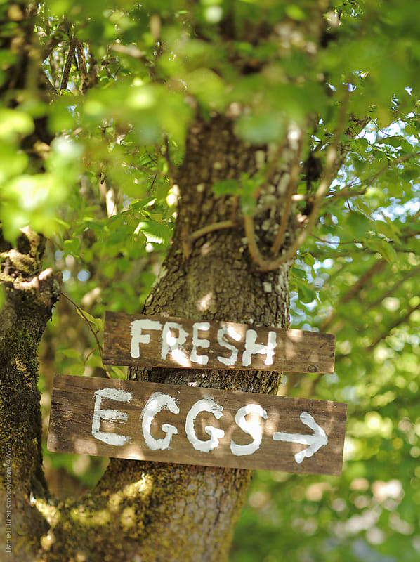 Fresh Eggs sign on tree by Daniel Hurst for Stocksy United