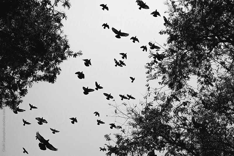 Flying by Chalit Saphaphak for Stocksy United