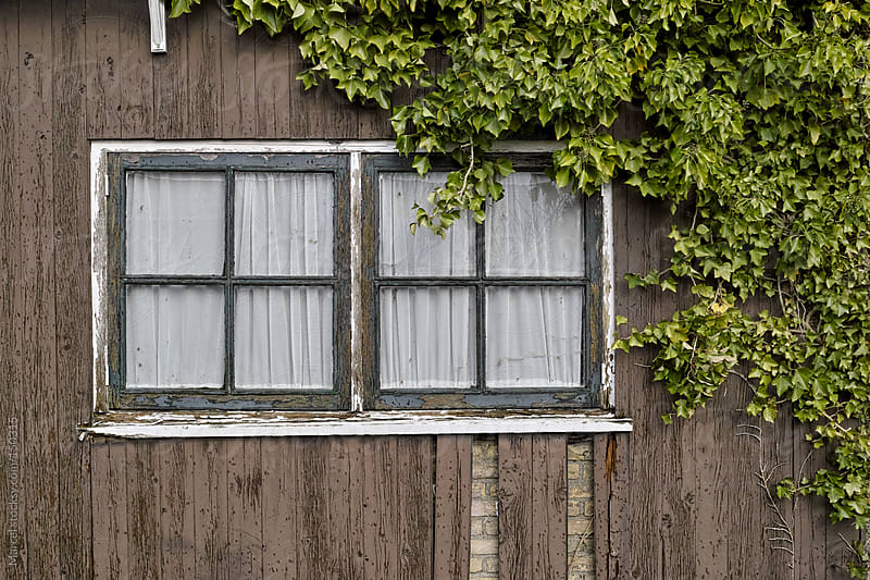 Old shed with ivy by Marcel for Stocksy United