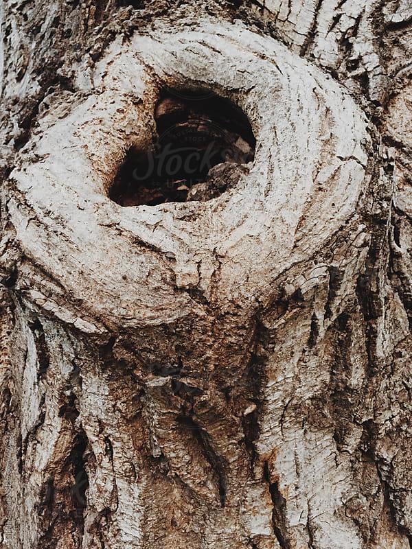 Tree by Giada Canu for Stocksy United