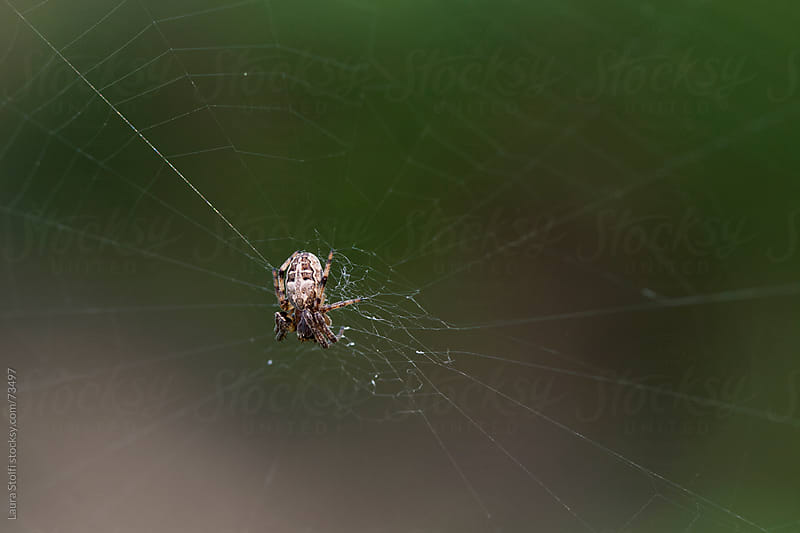 Macro catch of spider on its web by Laura Stolfi for Stocksy United