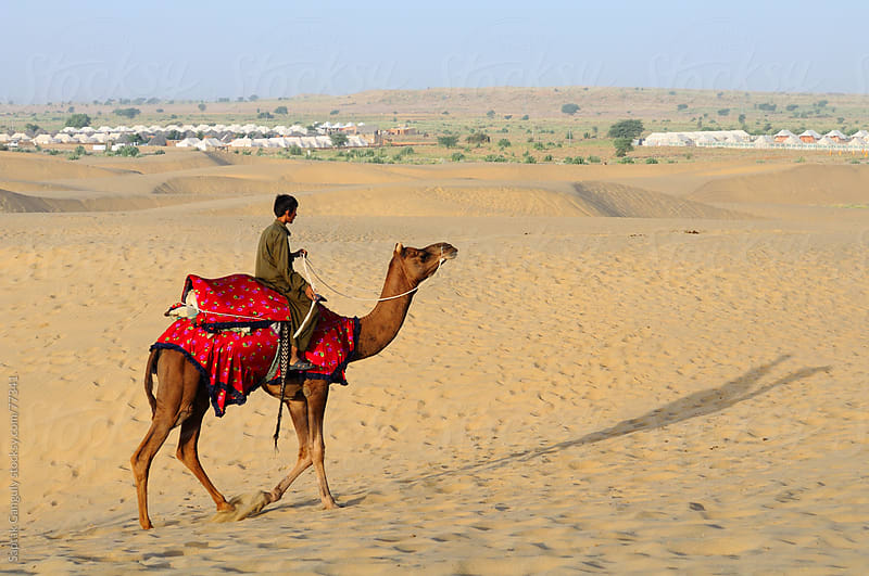 Young camel rider with his dromedary (Camelus dromedarius),India by Saptak Ganguly for Stocksy United
