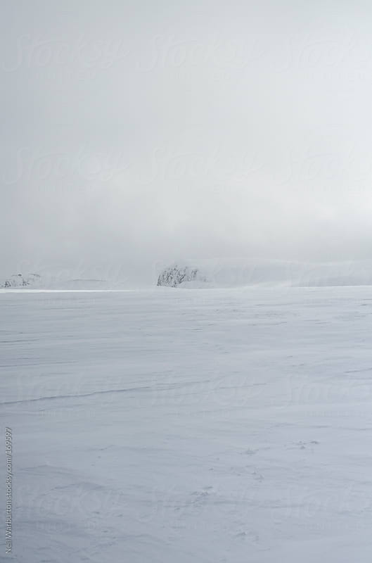 Frozen Wilderness by Neil Warburton for Stocksy United