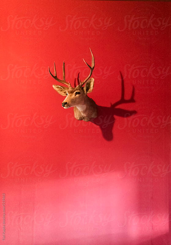 Deer mount in red room by Tod Kapke for Stocksy United