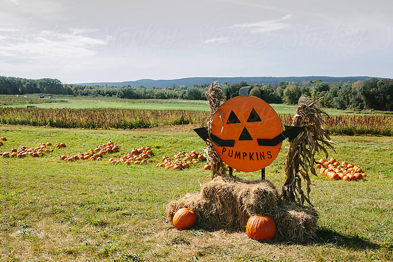 Pumpkin Farm Berkshire Mountains, Massachusetts  by Raymond Forbes LLC for Stocksy United