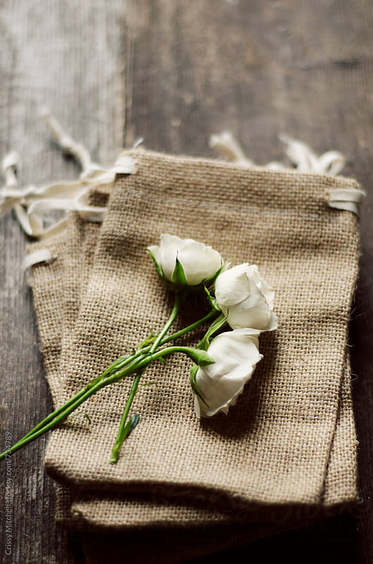 white roses by Crissy Mitchell for Stocksy United