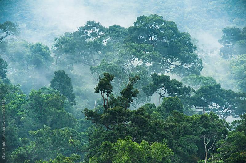 Khao Yai National Park by Chalit Saphaphak for Stocksy United